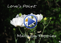 lp_matajia_poppy_icon
